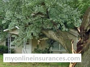 Claim insurance damage on fallen tree and branches 1